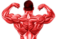 what is muscle advance creatine